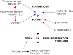 300px-Fibrinolysis