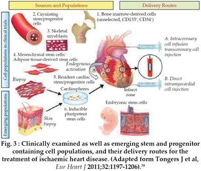 free Carbohydrate Metabolism